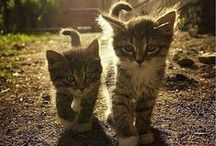 Cats and more cats...:)