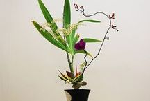 Floral Designs: Ikebana
