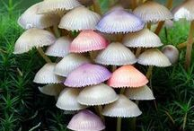 Fungi / All mushrooms are fungi but not all fungi are mushrooms. Take a look at the diversity!