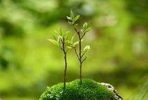 kantanna's small green world / plants. mini plants. mini things green.