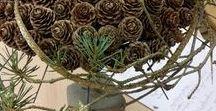 Pine cones - ideas