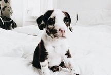Puppies / Can you handle the cuteness?  Enjoy the collection of instagram af cuties.