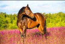 Cavalos, AMO... I Love Horses.