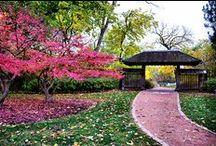 Jardim Japonês. Japanese garden