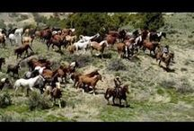 Cavalos; Amamos Demais.