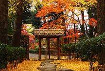 Outono-Autumn