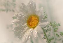Flowers / by Jenny Perova