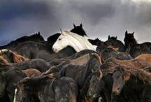Horses / by Jacqueline van Oosten