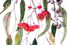 Botany / by Jacqueline van Oosten