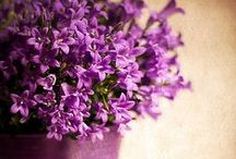 C C Purple Passion / Purple Passion