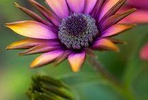 Flori,pomi,arbusti / imagini din gradina mea si.....nu numai