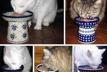 CAT / maxi
