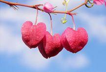 Heart*