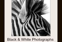 Black & White Photographs / A collection of black and white photographs