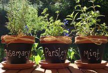 Herbs*