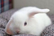 Cute Rabbits / Bunnies