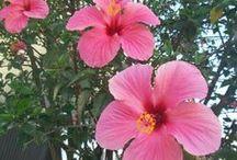 Flores Minhas e Paisagens