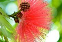 Natuur Flowers Bloemen Prachtige / by mieke lobker