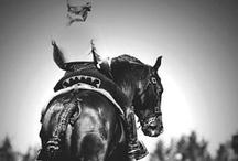 Horses / Déclinaisons équines