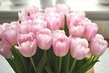| Tulips♥♡ |