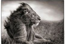 Photographer - Nick Brandt