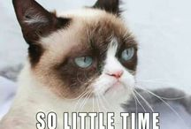 Everybody loves Grumpy Cat!