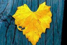 hearts / thousand ways to interpret love .. .