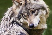 ~Kingdom Of Animals / Nature~