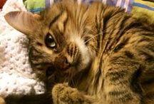 Love for Cats / Un vortice di emozione i nostri felini, solo chi le ha provate può capire il valore di queste creature!