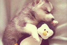 Animals / Everyone loves cute animals :)
