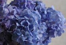 Splash color blue