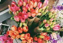 bouquets & plants