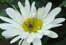 Mie foto / Le mie foto di fiori, compagni e viaggi