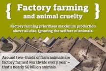 Factory Farming Infographics