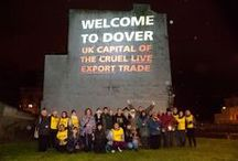 Stop Live Exports Projection in Dover / Our projection onto the White Cliffs of Dover on the chilly and blustery evening of 6th November helped to raise awareness of the cruel trade of live exports. Backed by 4,000 Compassion supporter donations, and the support of local action groups, KAALE (Kent Action Against Live Exports) and TALE (Thanet Against Live Exports), we caused quite a stir on the roads of Dover!