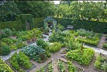 Grow my garden