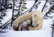 MOM ANIMALS