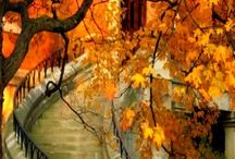 Autumn Love / All shades of fall