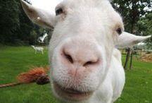 't Noordland boerderijdieren www.tnoordland.nl / De dieren van boerderij 't Noordland om te knuffelen en te verzorgen.