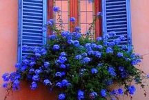 Beautiful shades of blue...... / Shades of blue
