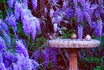 Beautiful shades of purple... / Amazing shades of purple