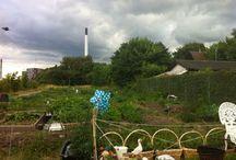 garden live