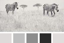 Creative | Colour pallets
