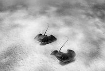 Nature | Sealife