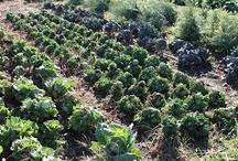 Jubilee Farm