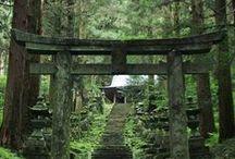 bonsai.niwaki