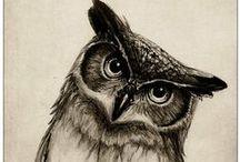 owls // baglyok