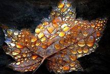 Season - Fall/Autumn