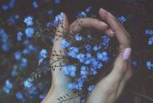 flora + fern