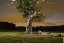 trees of the world / by Jannes Peters